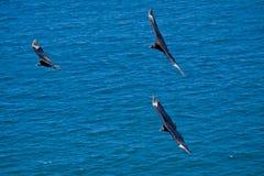 Mooie blauwe hemel en het zwarte vogels vliegen Royalty-vrije Stock Afbeelding