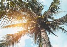 Mooie blauwe hemel en zon` s straal die achter kokospalmen glanzen royalty-vrije stock afbeeldingen