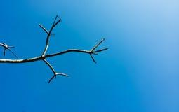 mooie blauwe hemel met een boom Stock Foto