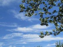 Mooie blauwe hemel, wolken en appelboom Stock Fotografie