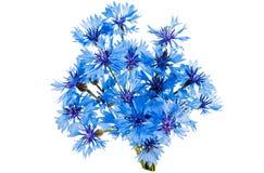 Mooie blauwe korenbloem stock afbeelding
