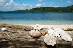 Mooie blauwe oceaan, koraal, overzeese shell en wit zandstrand Royalty-vrije Stock Foto's