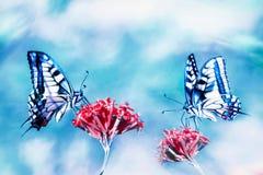 Mooie blauwe vlinders op rode bloemen Natuurlijk de zomer artistiek beeld stock fotografie