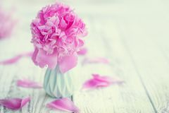 Mooie bleek - roze pioenenboeket in vaas over witte lijstachtergrond stock foto