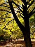 Mooie bliksem in bomen in dalingstijd royalty-vrije stock foto's