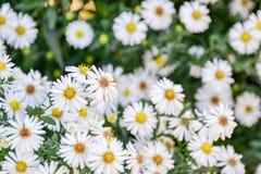 Mooie bloeiende bloemen in de tuin stock afbeeldingen