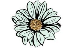 Mooie bloeiende bloemtuin Stock Afbeeldingen