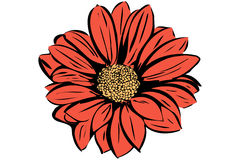 Mooie bloeiende bloemtuin Stock Foto's