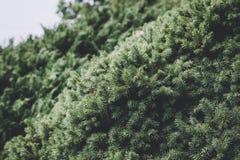 Mooie bloeiende groene flora in tuin, de zomerachtergrond stock fotografie