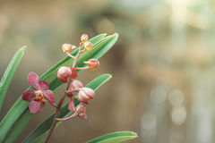 Mooie bloeiende orchideeën in bos Stock Fotografie