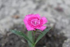 Mooie bloem Stock Foto's