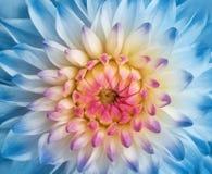 Mooie bloem stock afbeeldingen