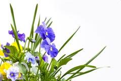 Mooie bloem stock afbeelding