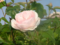 Mooie bloem Stock Foto