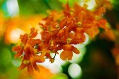 Mooie bloem Royalty-vrije Stock Foto