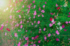 Mooie bloem Royalty-vrije Stock Foto's
