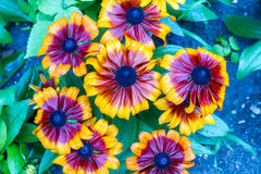 Mooie bloem stock illustratie