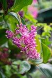 Mooie bloem stock fotografie