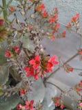 Mooie bloem Royalty-vrije Stock Afbeelding