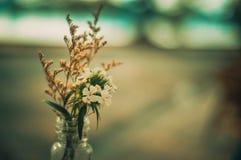 Mooie bloem, bokeh, fotografie, het leven Stock Afbeelding