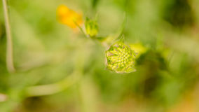Mooie bloem in de lente stock foto's