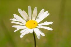 Mooie bloem in de lente royalty-vrije stock foto's