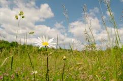 Mooie bloem in de lente stock afbeelding