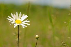 Mooie bloem in de lente stock afbeeldingen