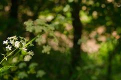 Mooie bloem in de lente stock fotografie