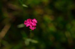 Mooie bloem in de lente stock foto