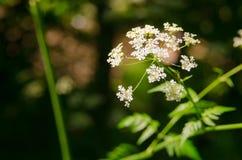 Mooie bloem in de lente royalty-vrije stock afbeeldingen