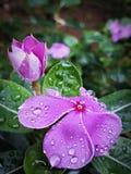 Mooie bloem in de tuin royalty-vrije stock afbeeldingen