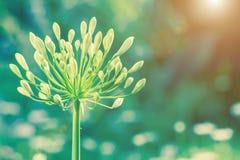 Mooie bloem en groene bladachtergrond in tuin Royalty-vrije Stock Afbeeldingen