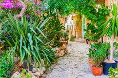 Mooie bloem en installatietuin van mediterraan huis royalty-vrije stock foto