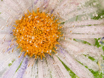 Mooie bloem in ijs Royalty-vrije Stock Afbeeldingen
