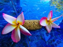 Mooie bloem Koh Tao Thailand Stock Fotografie