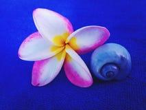 Mooie bloem Koh Tao Thailand Stock Foto's