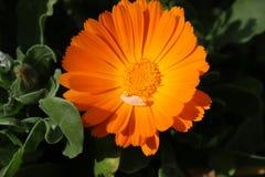 Mooie bloem met een klein blad op het stock afbeelding