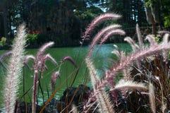 Mooie bloem met waterachtergrond Royalty-vrije Stock Afbeeldingen