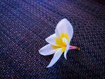 Mooie bloem natuurlijk voor bedrijfsspionachtergrond Royalty-vrije Stock Afbeeldingen