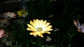 Mooie bloem onder zonnestraal stock foto