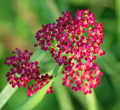 Mooie bloem op een achtergrond van een gras Royalty-vrije Stock Foto