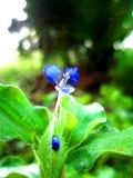 Mooie bloem op het gras royalty-vrije stock foto's