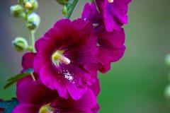 Mooie bloem tijdens het bloeien stock afbeeldingen