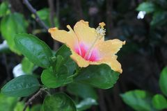 Mooie bloem in tuin Stock Foto
