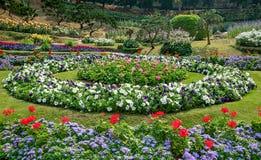 Mooie bloem in tuin royalty-vrije stock foto's