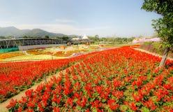 Mooie bloem in tuin stock fotografie