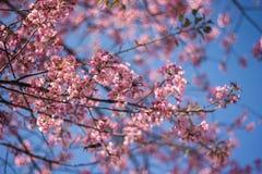 Mooie bloemachtergrond royalty-vrije stock foto
