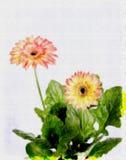 Mooie bloembeelden op een witte achtergrond vector illustratie