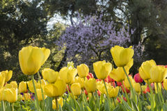 Mooie bloembloesem bij Descanso-Tuin Royalty-vrije Stock Afbeelding